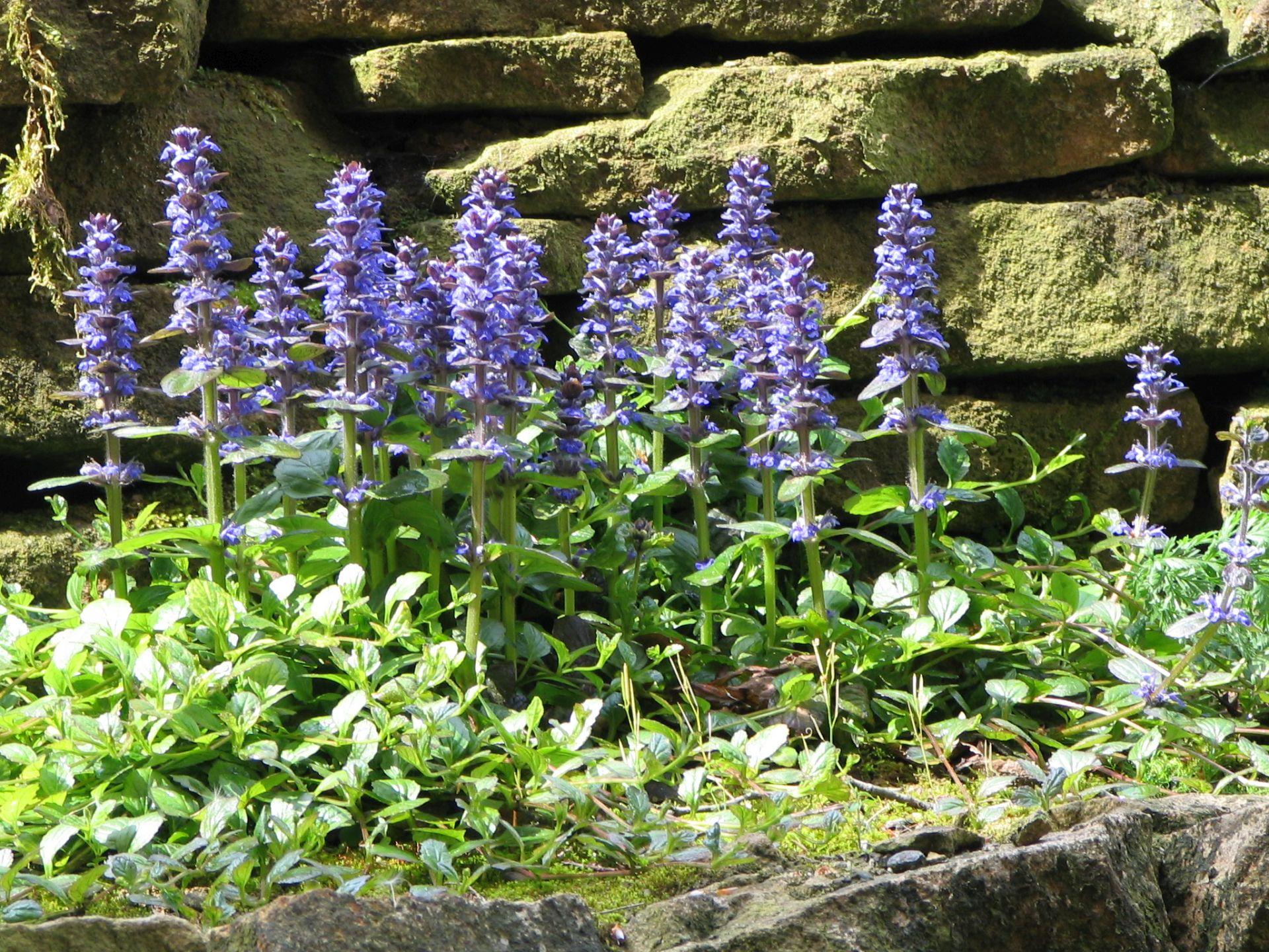 Lieblings Uferpflanzen | Teichpflanzen & Teichbau #NC_08