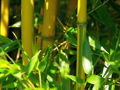 Bambus Am Teich Teichpflanzen Teichbau