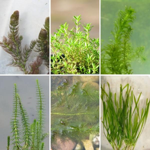 Antialgen Pflanzen Sortimente