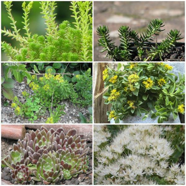 Pflanzenpaket Dachbegrünung